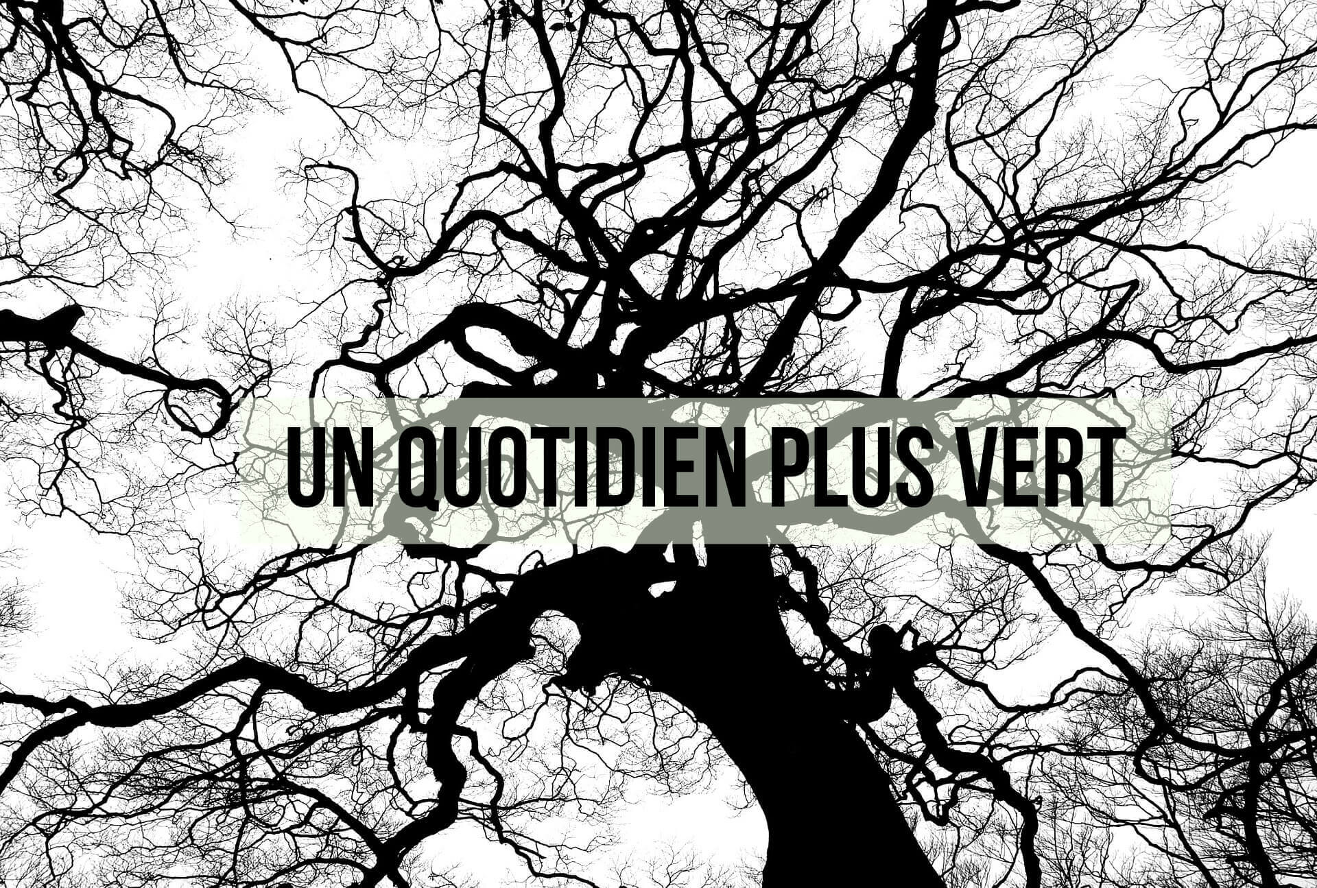 tree-894903_1920