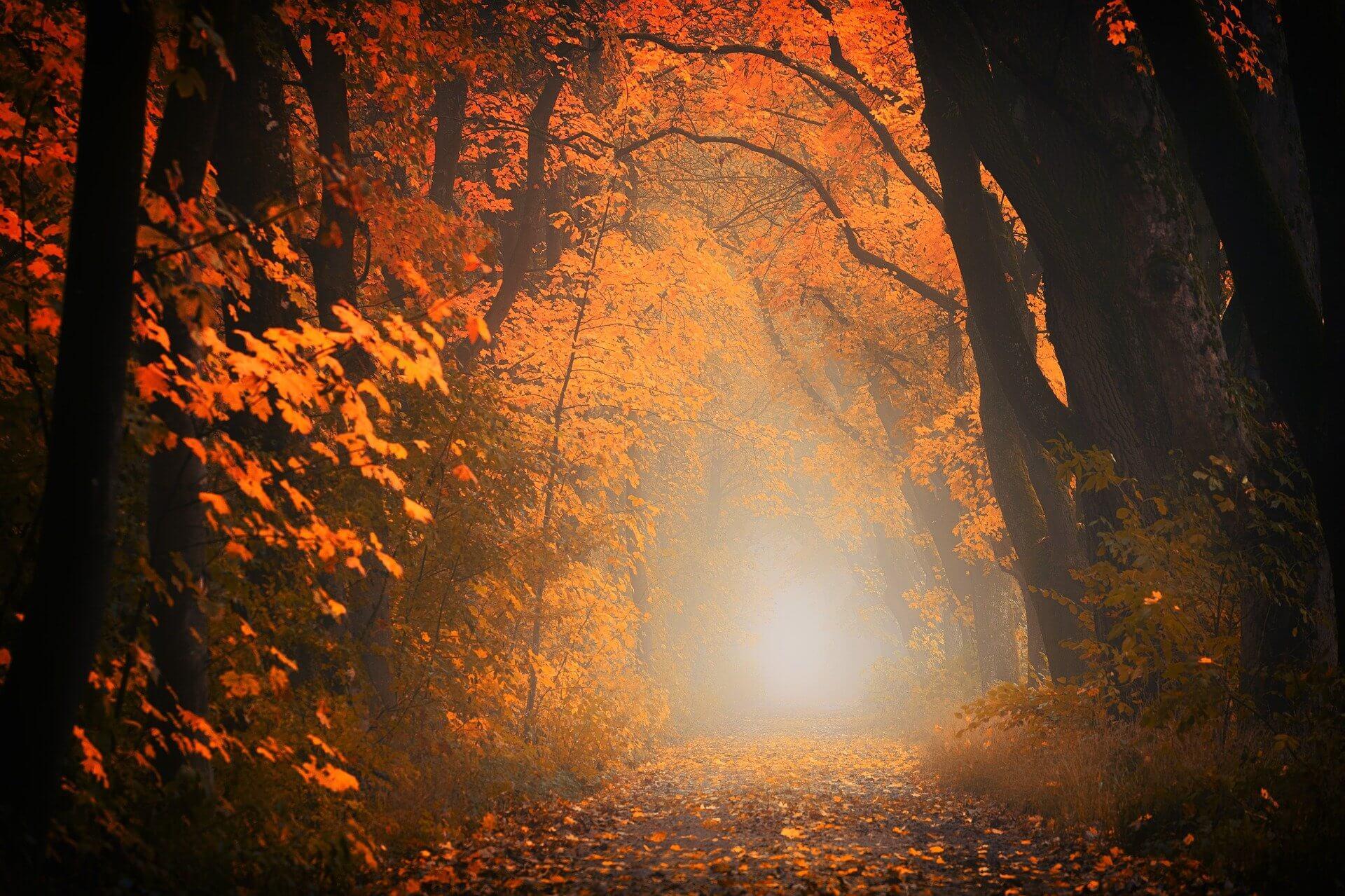 light-3130988_1920