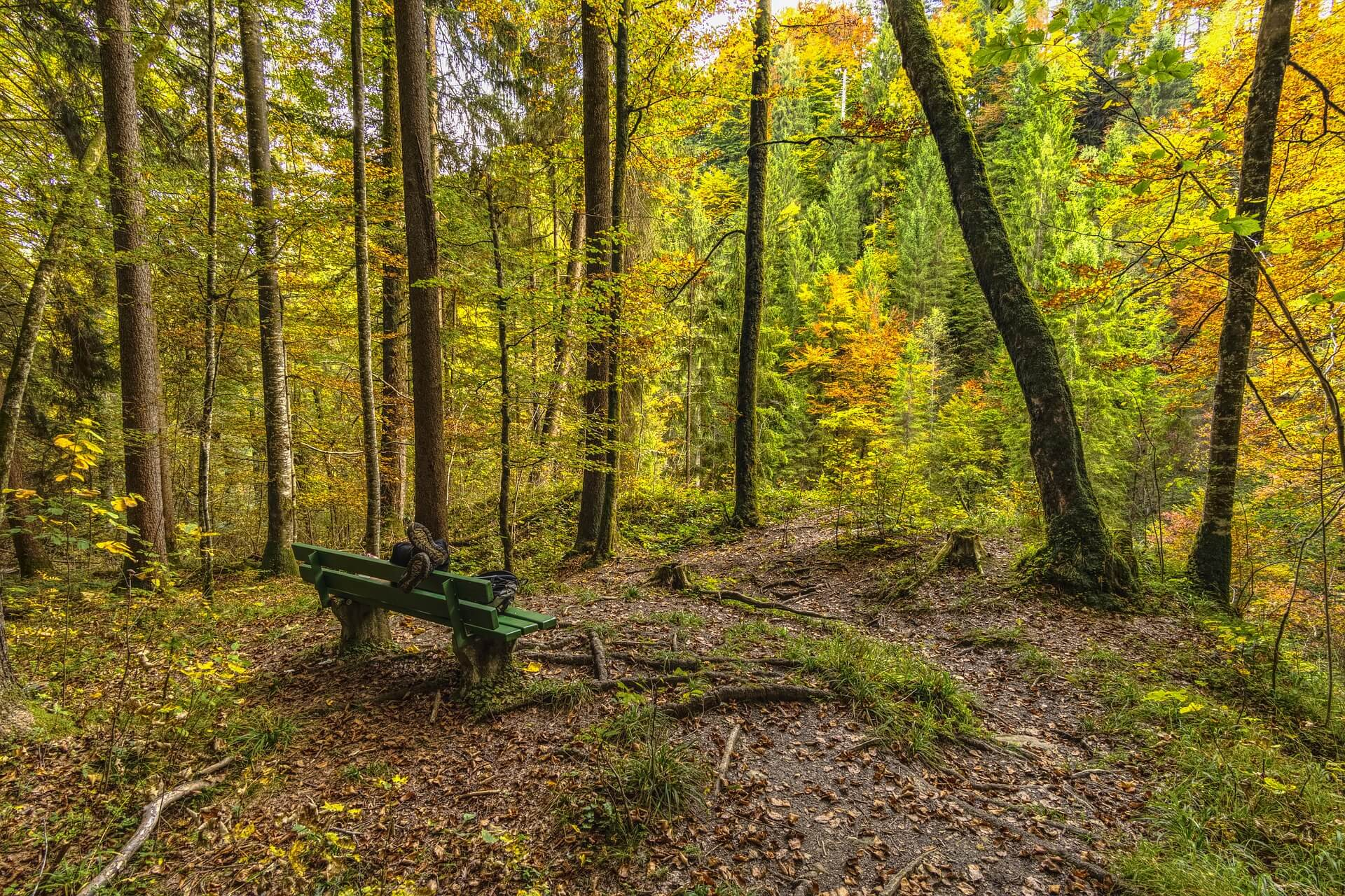 forest-g97082009a_1920